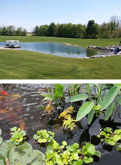 Pond Water Quality Treatment Filtration Rochester Syracuse NY