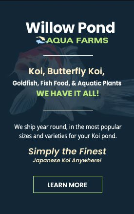 Japanese Koi Farm - Koi, Goldfish, Aquatic Plants, Pond Supplies Rochester NY