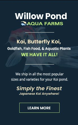 koi fish supplier, goldfish, aquatic plants